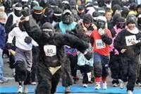 austin gorillas